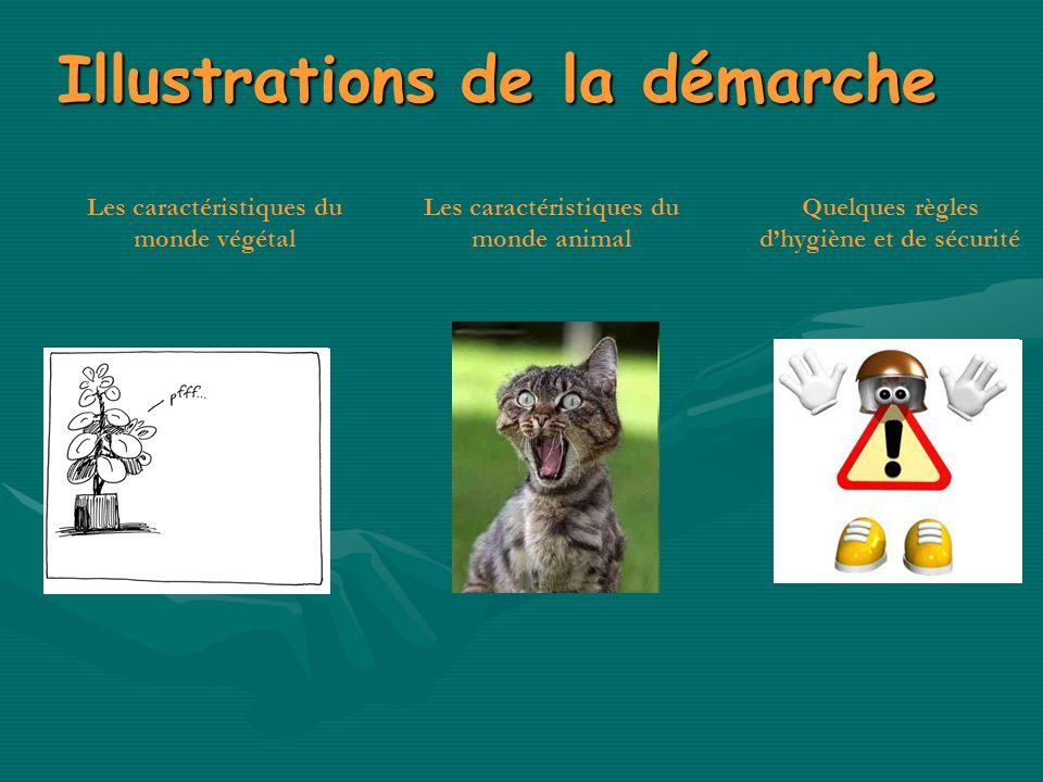 Illustrations de la démarche