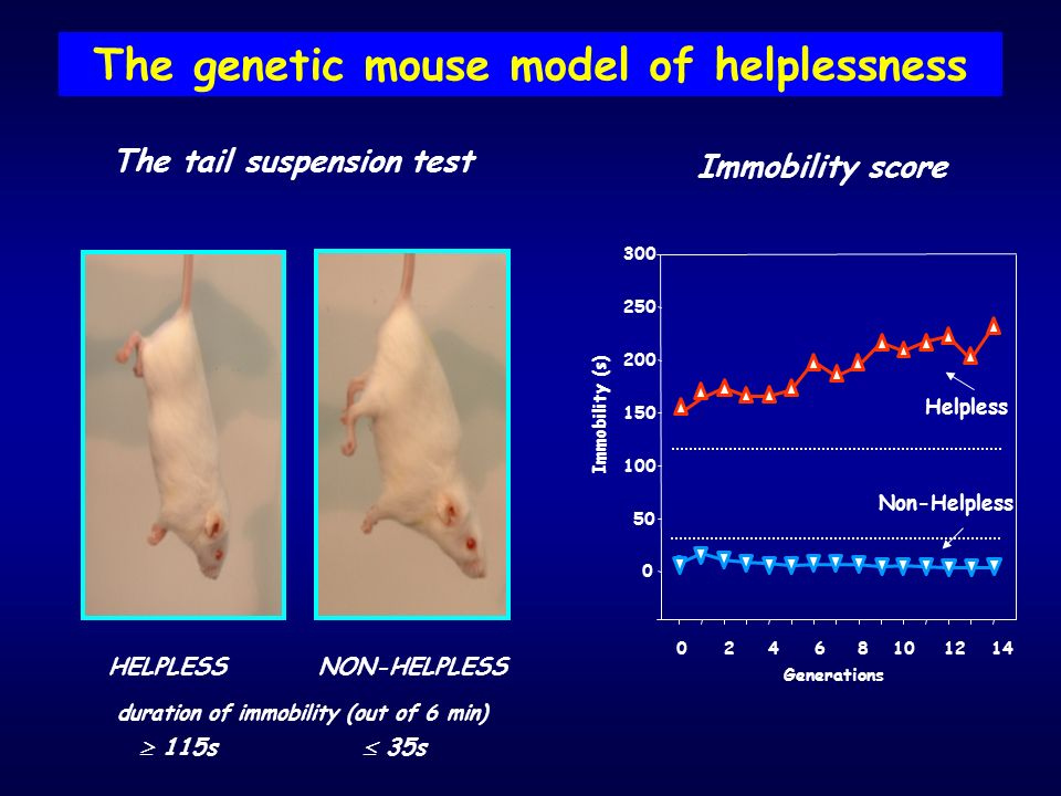 The genetic mouse model of helplessness The tail suspension test