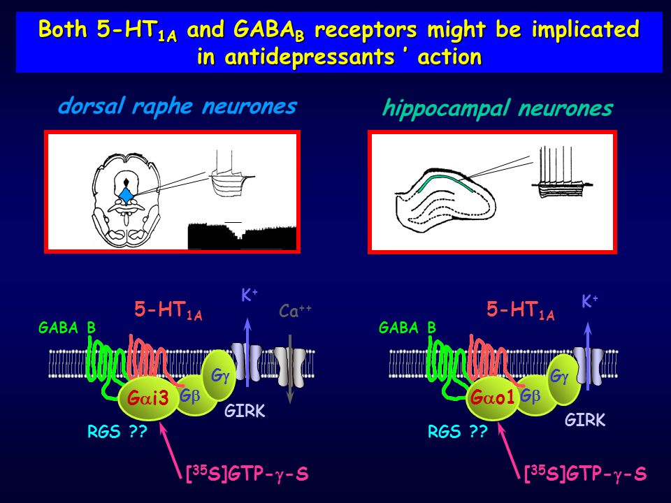 Both 5-HT1A and GABAB receptors might be implicated
