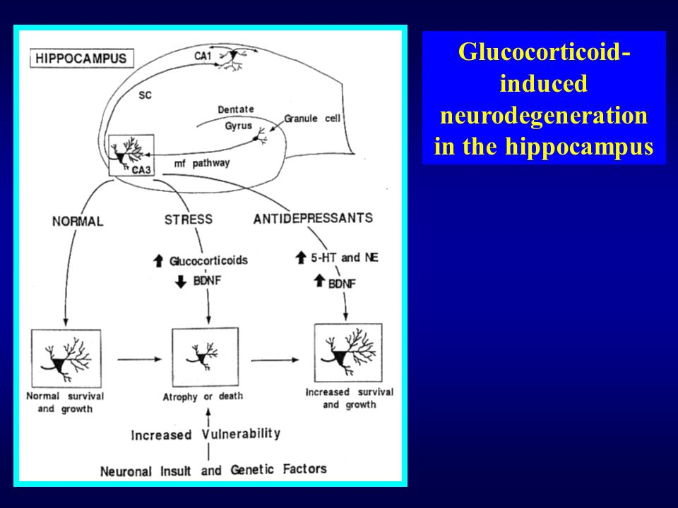 Glucocorticoid-induced neurodegeneration in the hippocampus