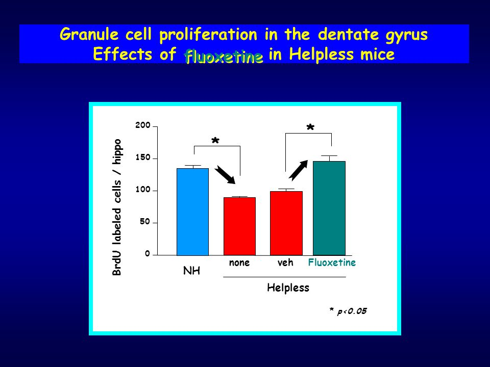 Granule cell proliferation in the dentate gyrus