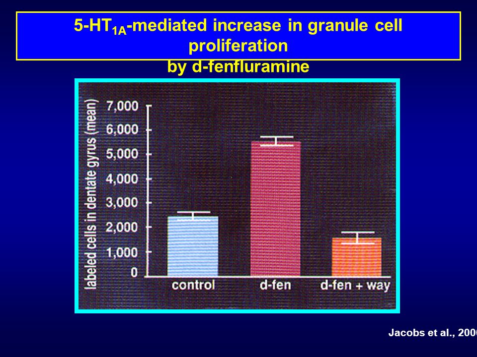 5-HT1A-mediated increase in granule cell proliferation