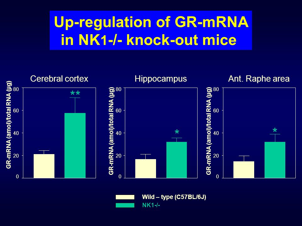 Up-regulation of GR-mRNA in NK1-/- knock-out mice