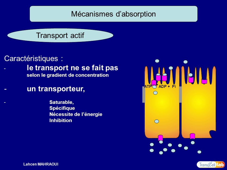 Mécanismes d'absorption