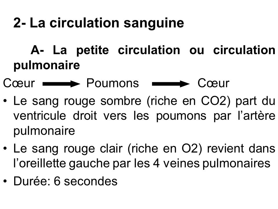 2- La circulation sanguine