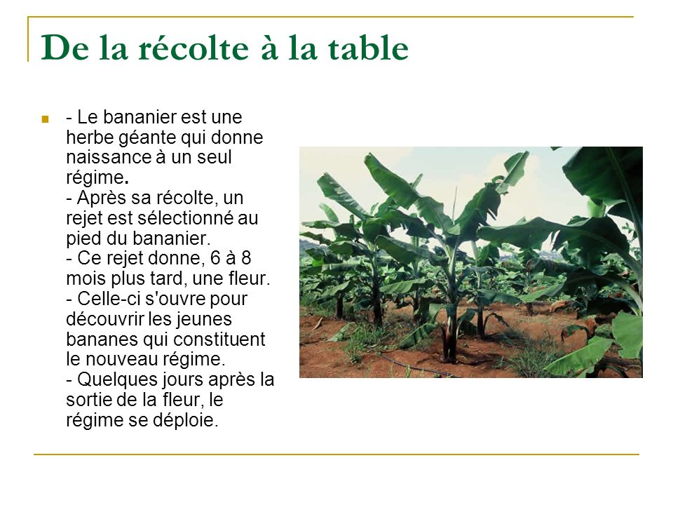 De la récolte à la table