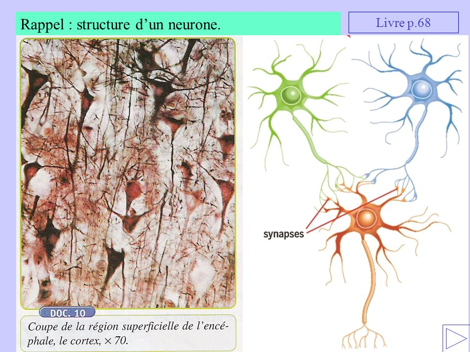 Rappel : structure d'un neurone.