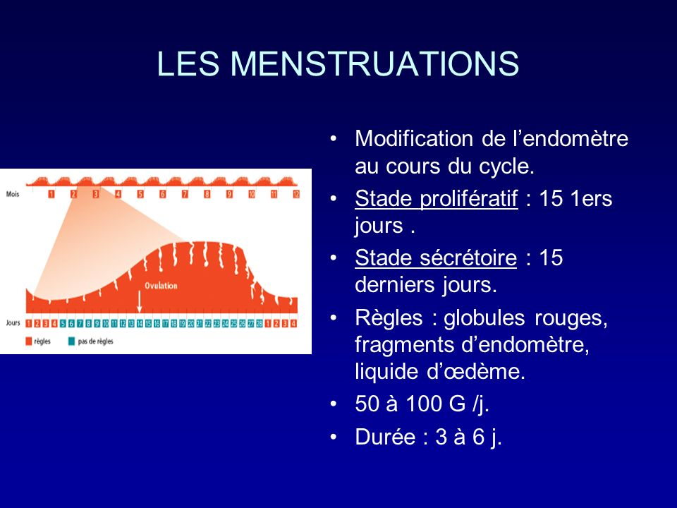 LES MENSTRUATIONS Modification de l'endomètre au cours du cycle.
