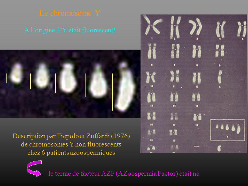 Le chromosome Y A l'origine, l'Y était fluorescent!