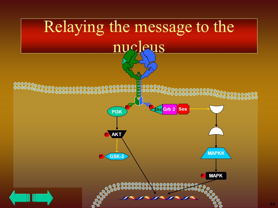Relaying the message to the nucleus