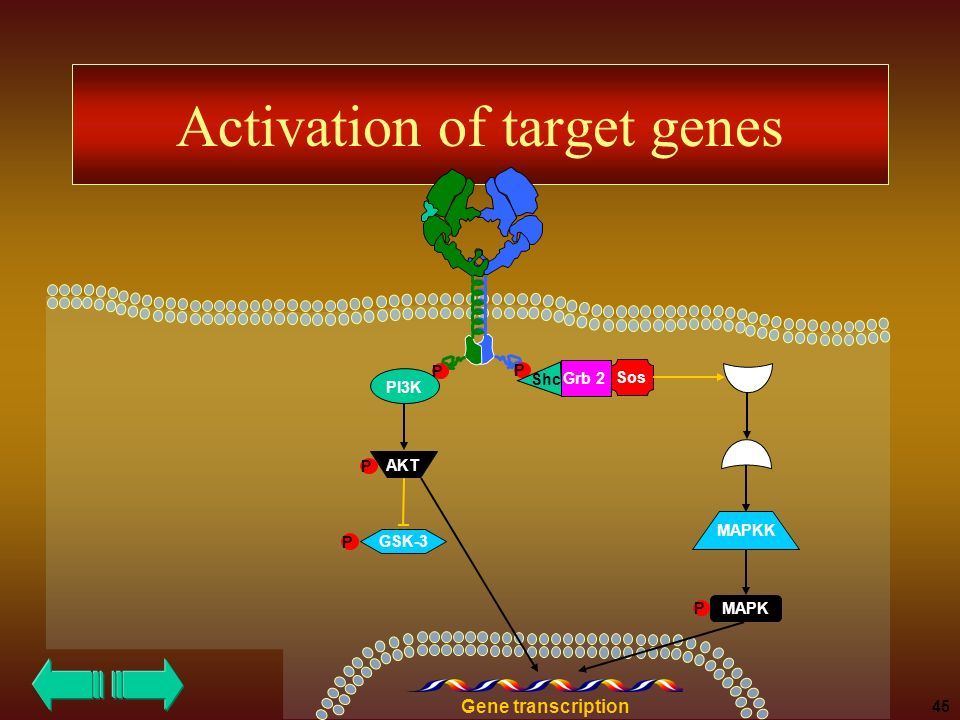 Activation of target genes