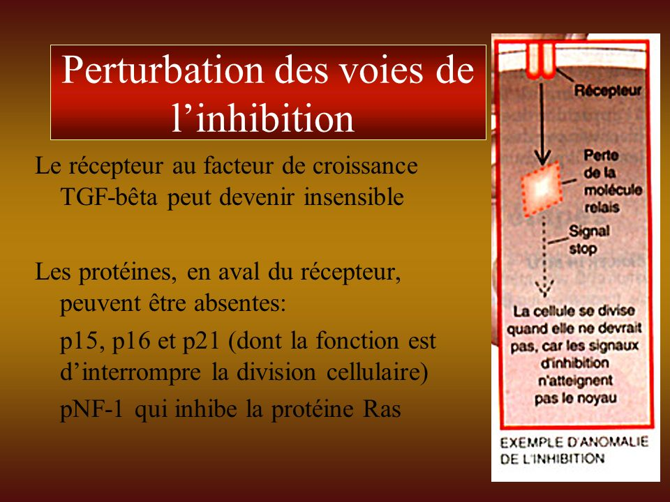 Perturbation des voies de l'inhibition