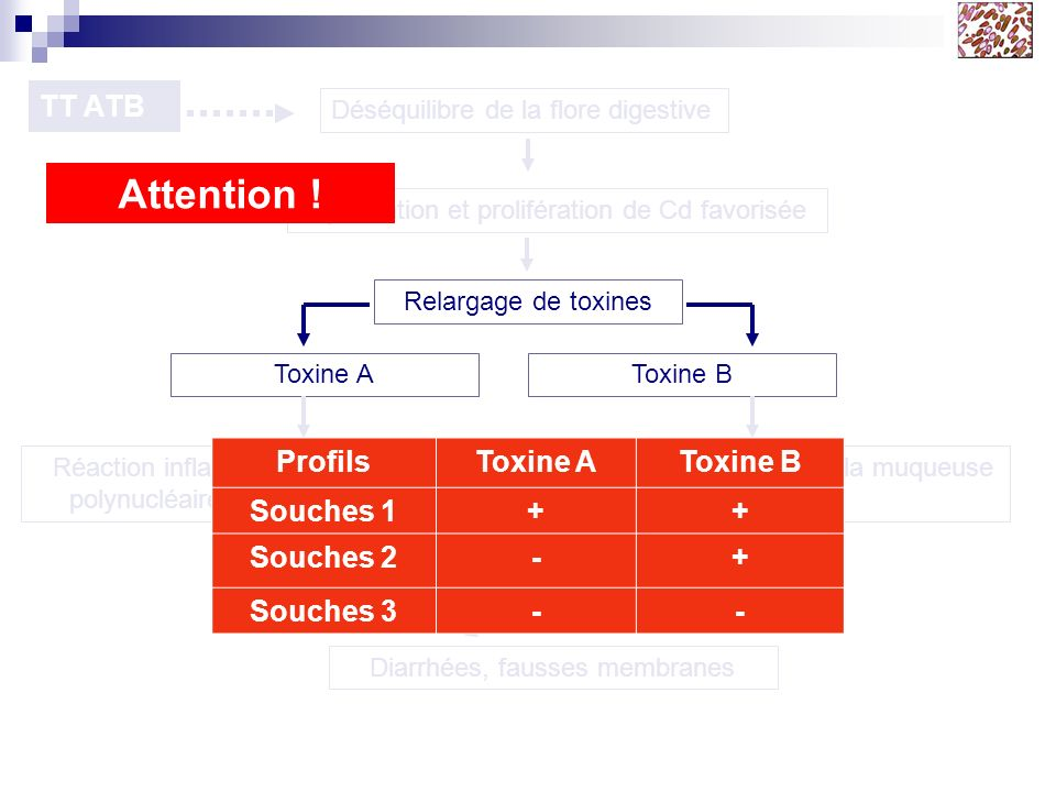 Attention ! TT ATB Profils Toxine A Toxine B Souches 1 + Souches 2 -
