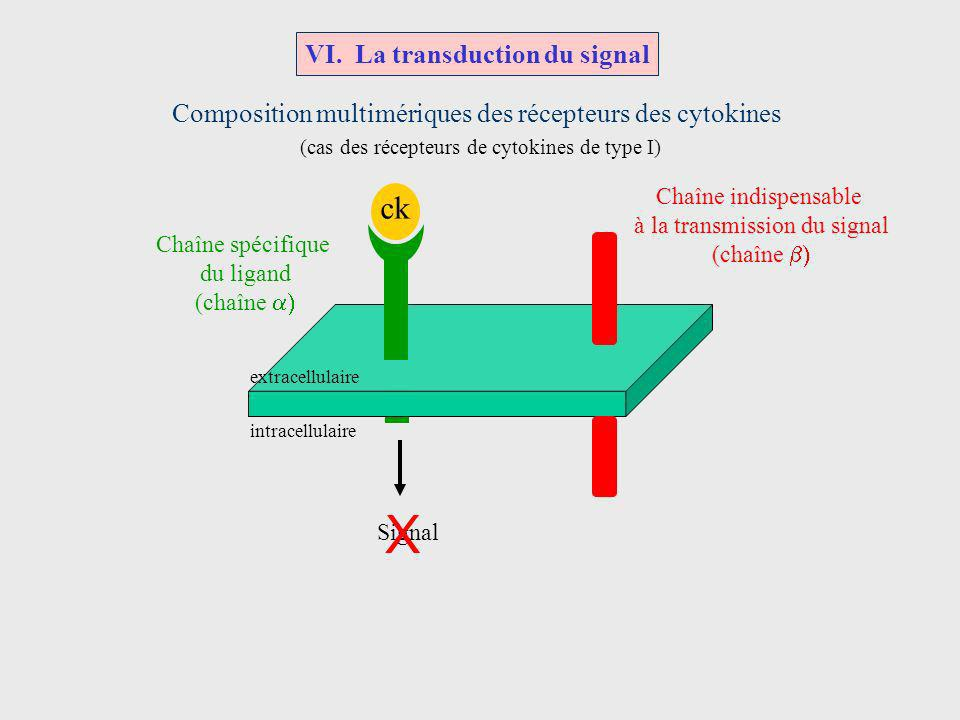 VI. La transduction du signal