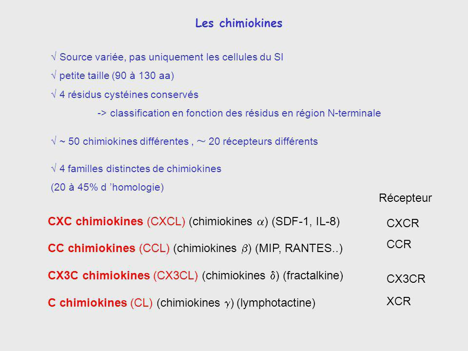 CXC chimiokines (CXCL) (chimiokines a) (SDF-1, IL-8) CXCR
