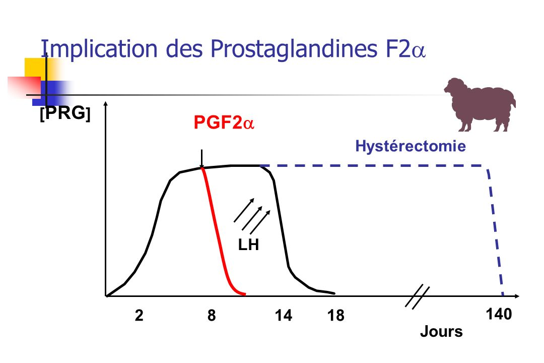 Implication des Prostaglandines F2a