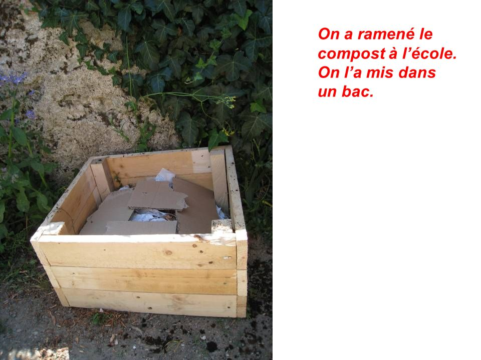 On a ramené le compost à l'école. On l'a mis dans un bac.