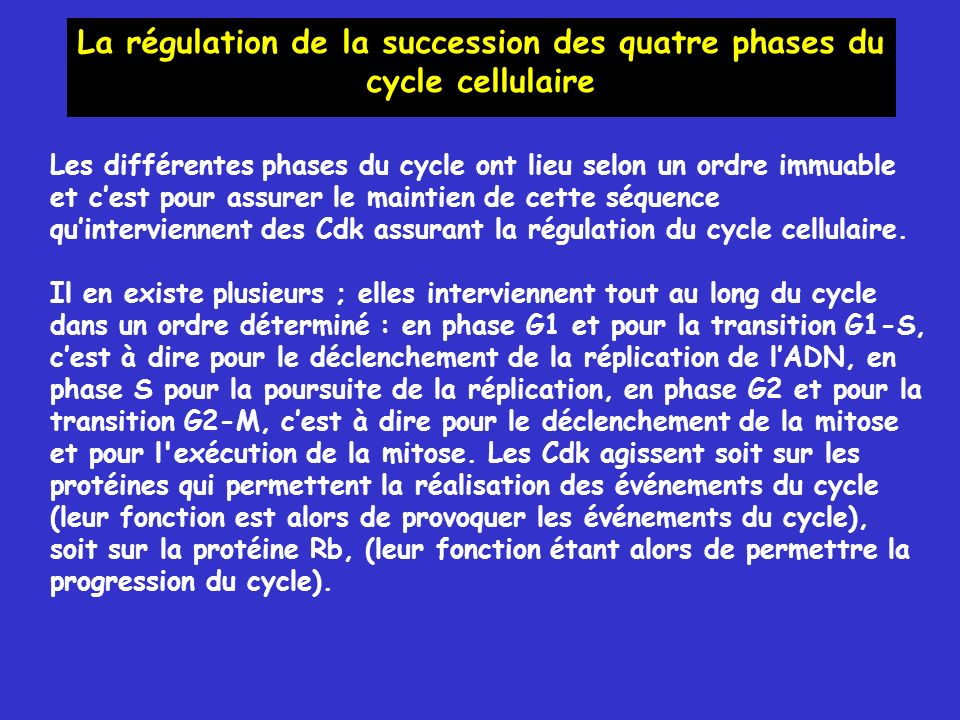 La régulation de la succession des quatre phases du cycle cellulaire