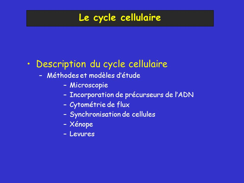 Description du cycle cellulaire
