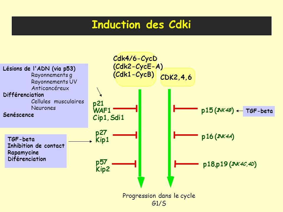 Progression dans le cycle