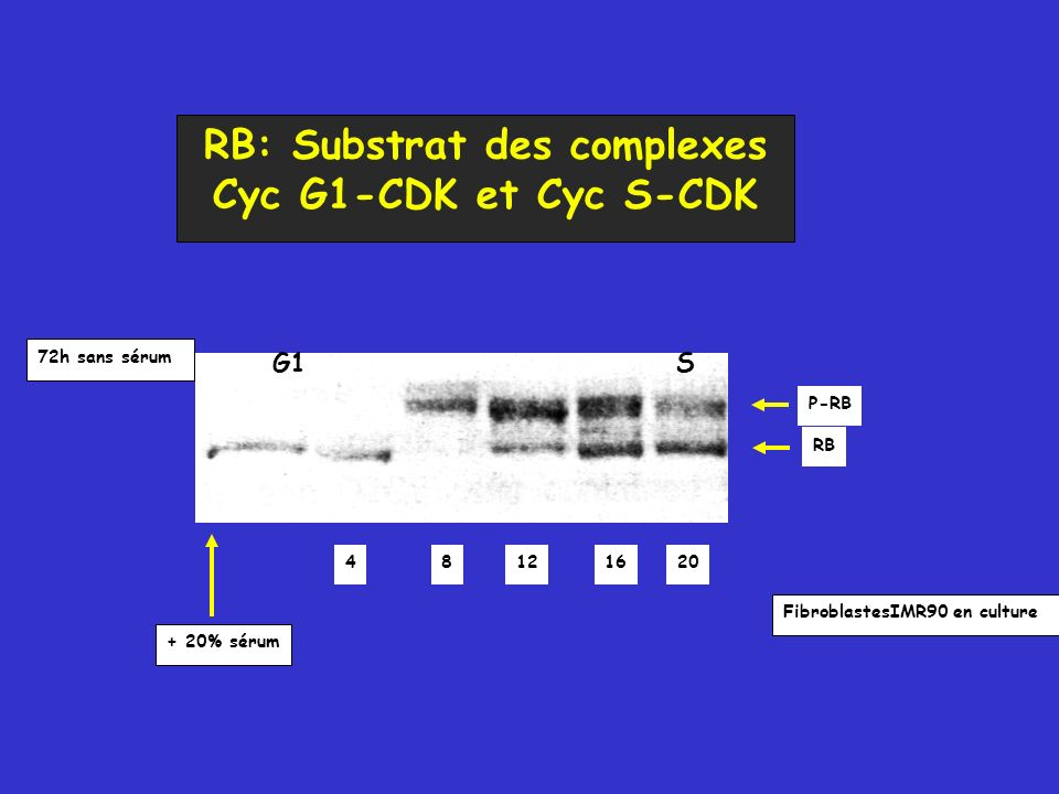 RB: Substrat des complexes