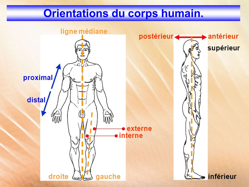 Orientations du corps humain.