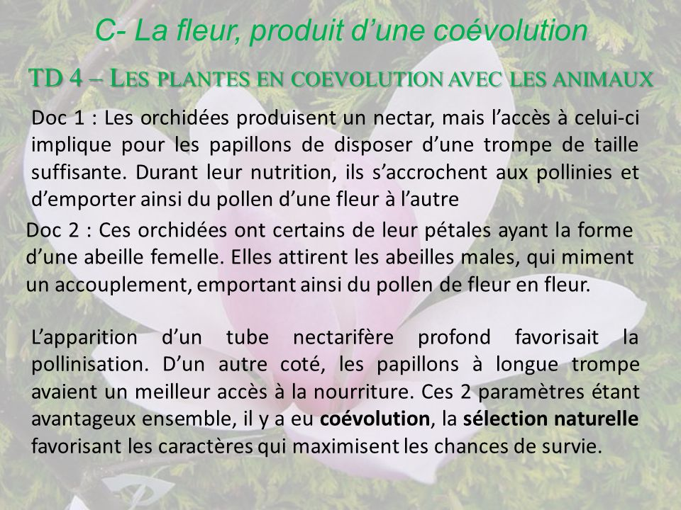 1a5 – l'exemple de la vie fixée chez les plantes - ppt télécharger