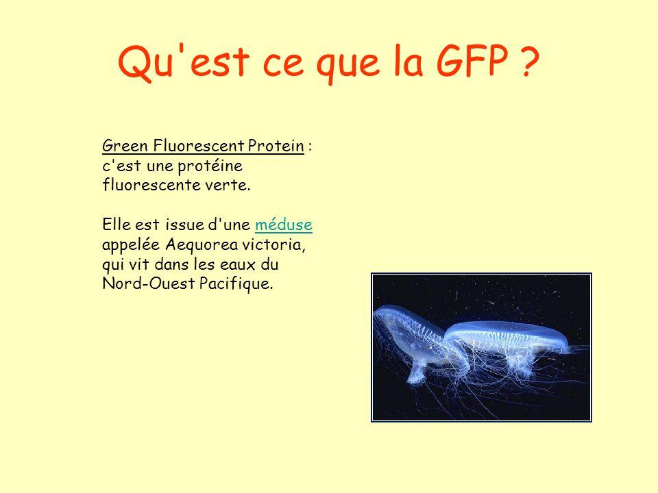 la gfp green fluorescent protein ppt video online t l charger. Black Bedroom Furniture Sets. Home Design Ideas