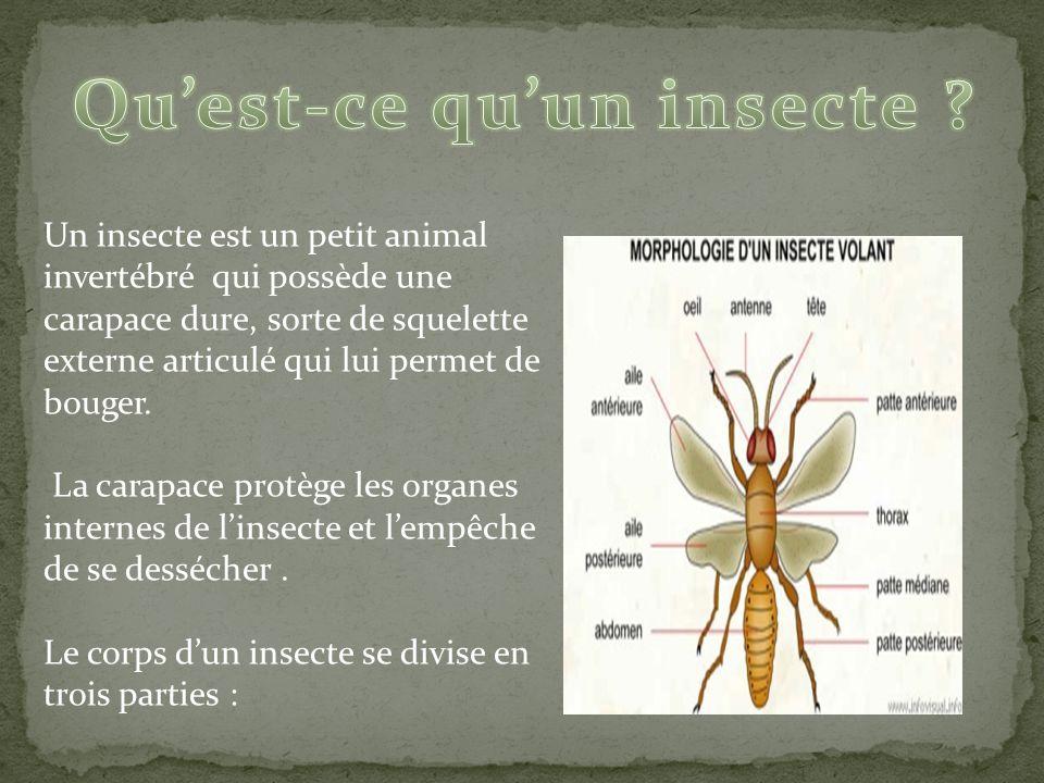 les insectes ppt video online t l charger. Black Bedroom Furniture Sets. Home Design Ideas
