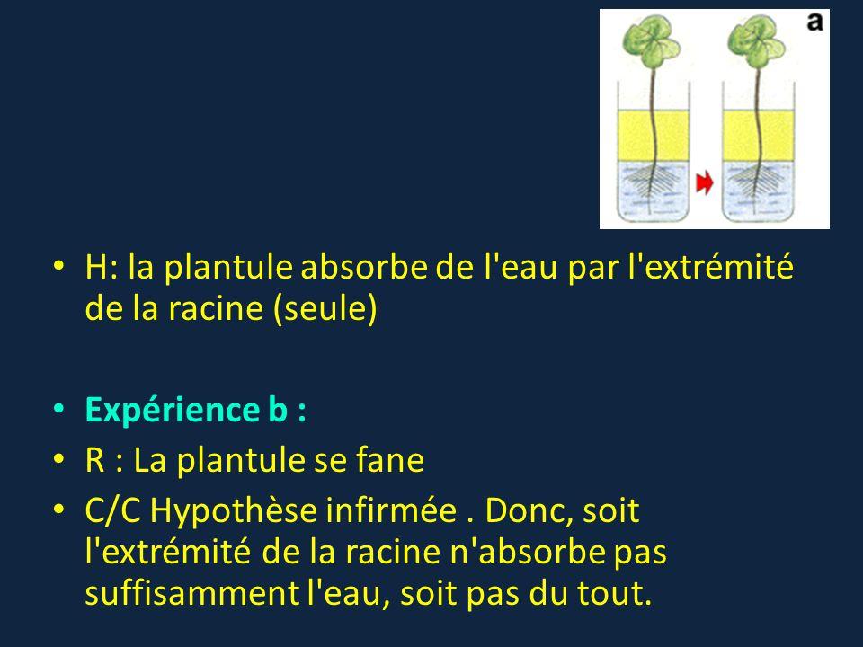 H  la plantule absorbe de l eau par l extrémité de la racine (seule 51fde5cf0d9