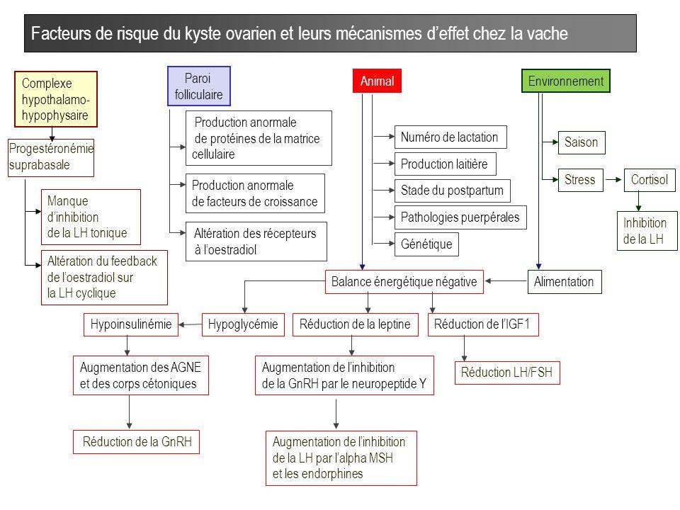 oestradiol eleve et kyste fonctionnel