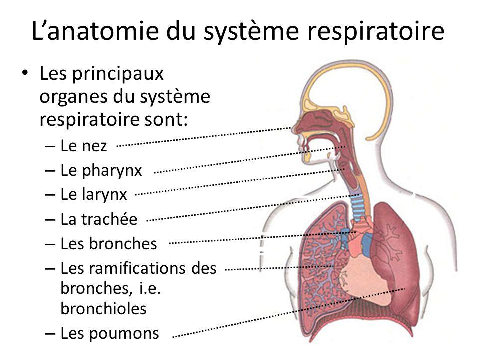 Anatomie et physiologie : système respiratoire - ppt télécharger
