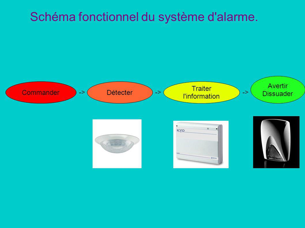 domus definition