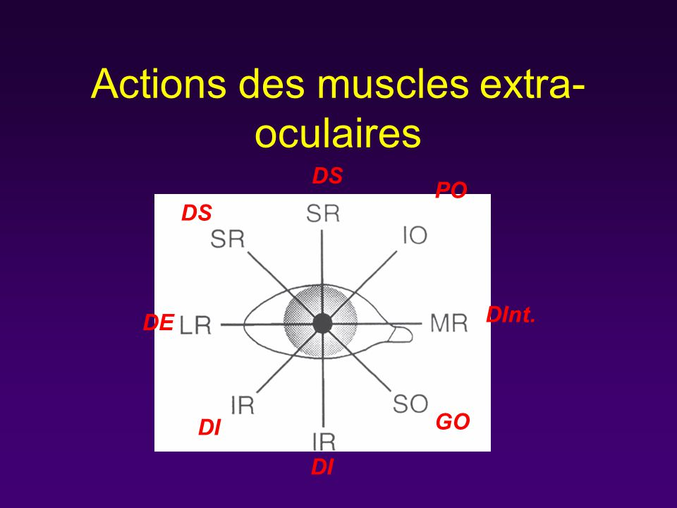 Actions des muscles extra-oculaires