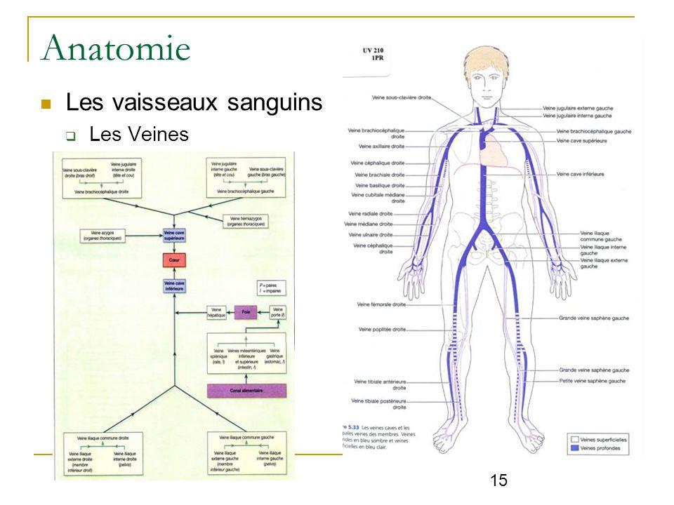 anatomie physiologie de l appareil cardiovasculaire ppt video online t l charger. Black Bedroom Furniture Sets. Home Design Ideas