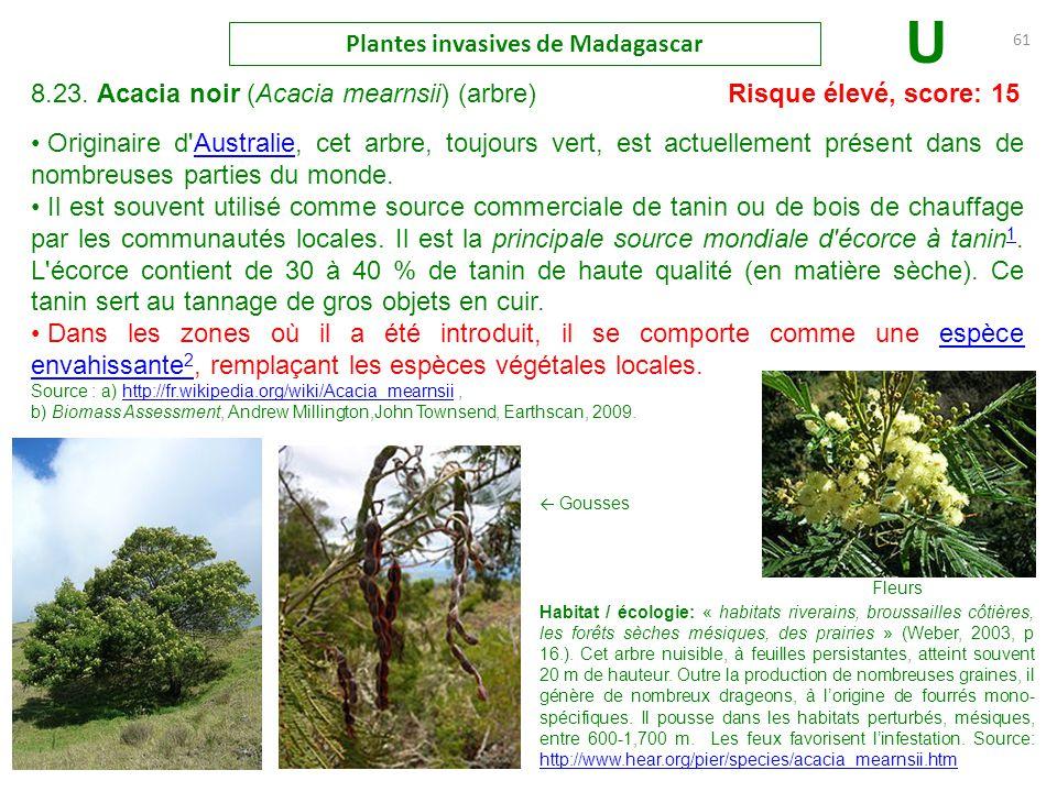 arbre jacaranda de madagascar