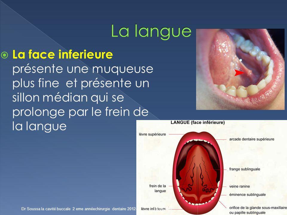 sillons dans la langue