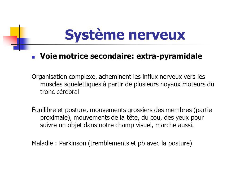 les voies pyramidales et extrapyramidales pdf