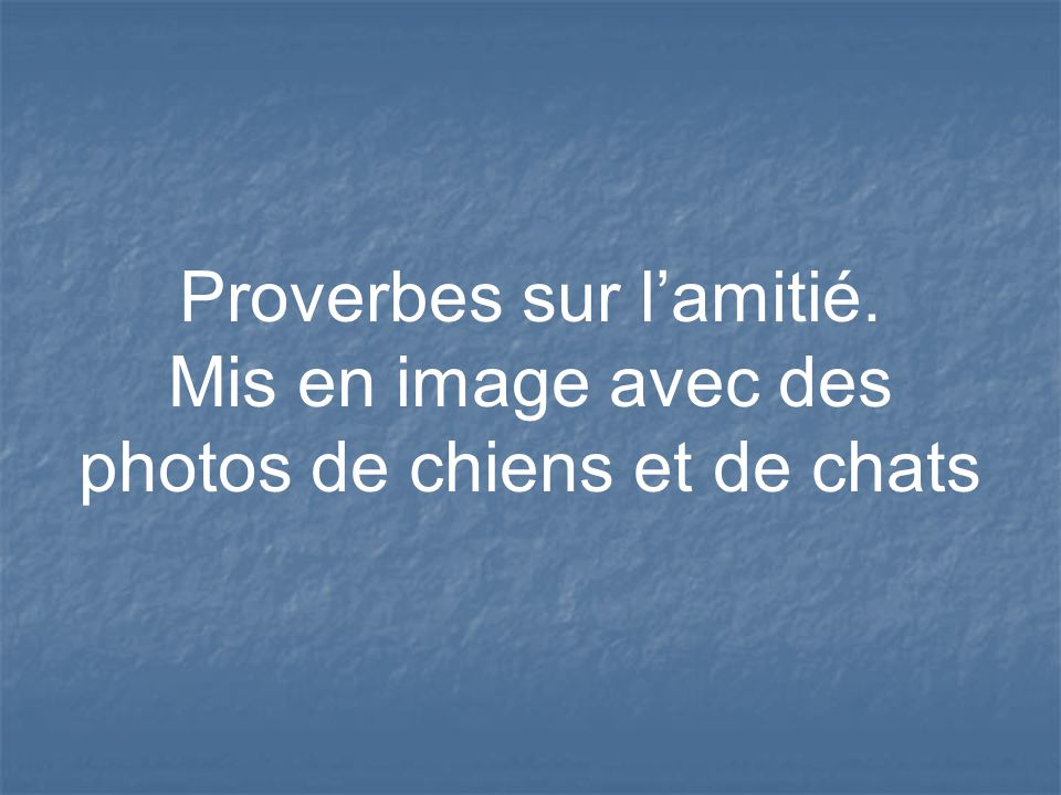 proverbes sur l amiti ppt video online t l charger. Black Bedroom Furniture Sets. Home Design Ideas