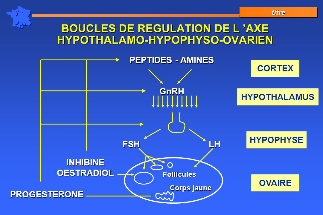 BOUCLES DE REGULATION DE L 'AXE HYPOTHALAMO-HYPOPHYSO-OVARIEN