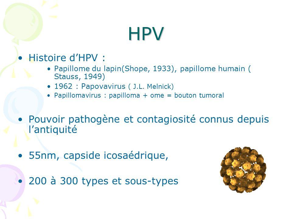 papillomavirus humain histoire