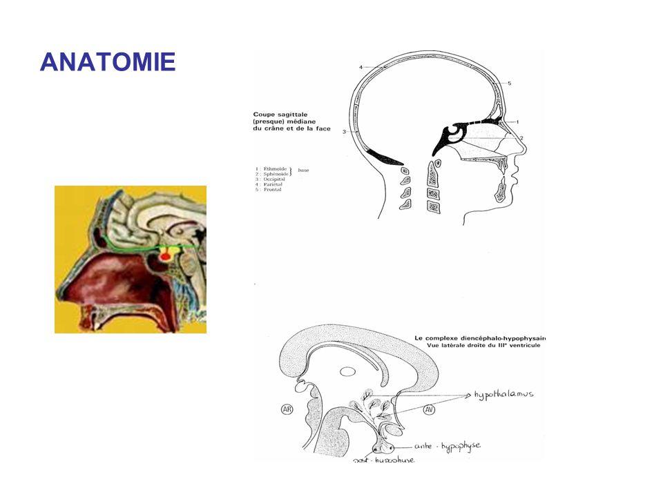 Atemberaubend Anatomie Und Physiologie Der Hypophyse Ppt ...
