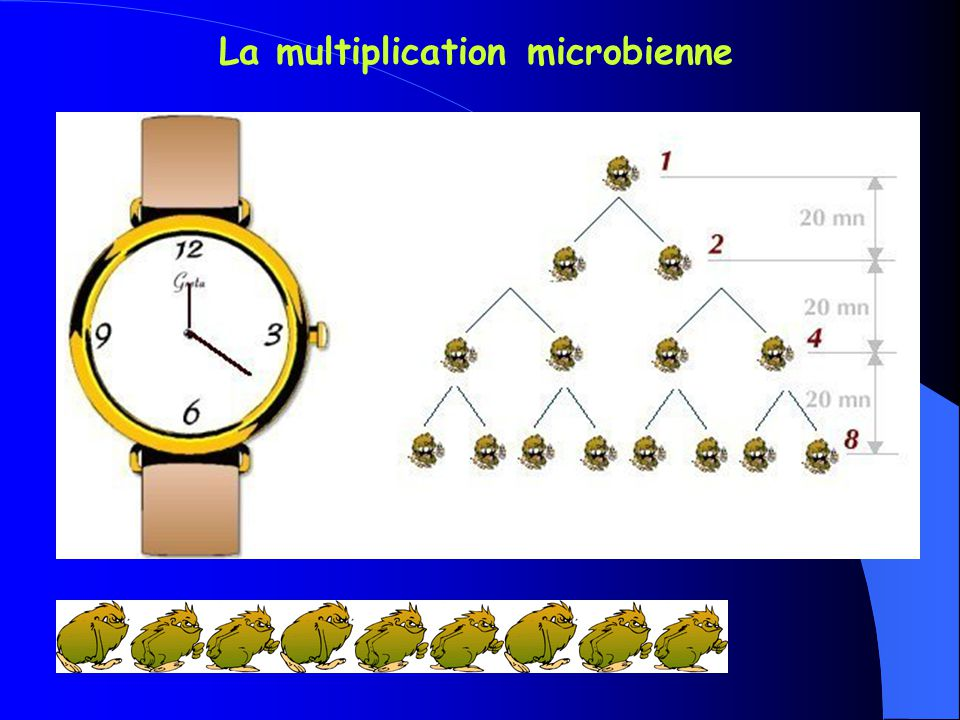 La multiplication microbienne