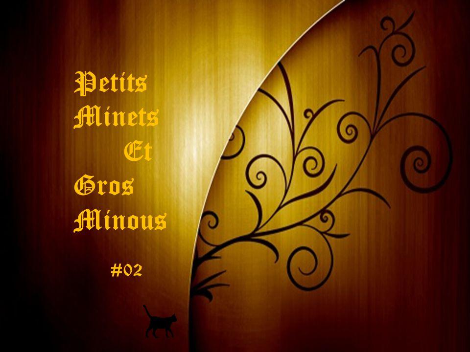 Petits Minets Et Gros Minous   ppt video online télécharger 9d573366c9c8