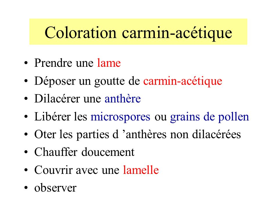Coloration carmin-acétique