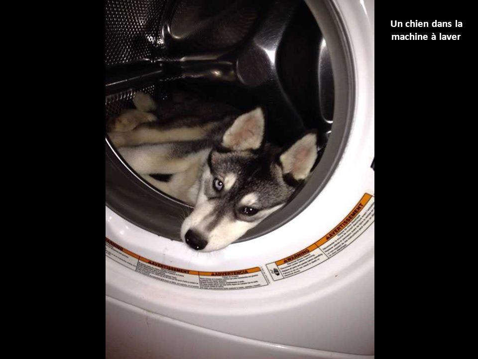 ces 40 chiens qui jouent cache cache n ont vraiment rien compris aux r gles du jeu les chiens. Black Bedroom Furniture Sets. Home Design Ideas