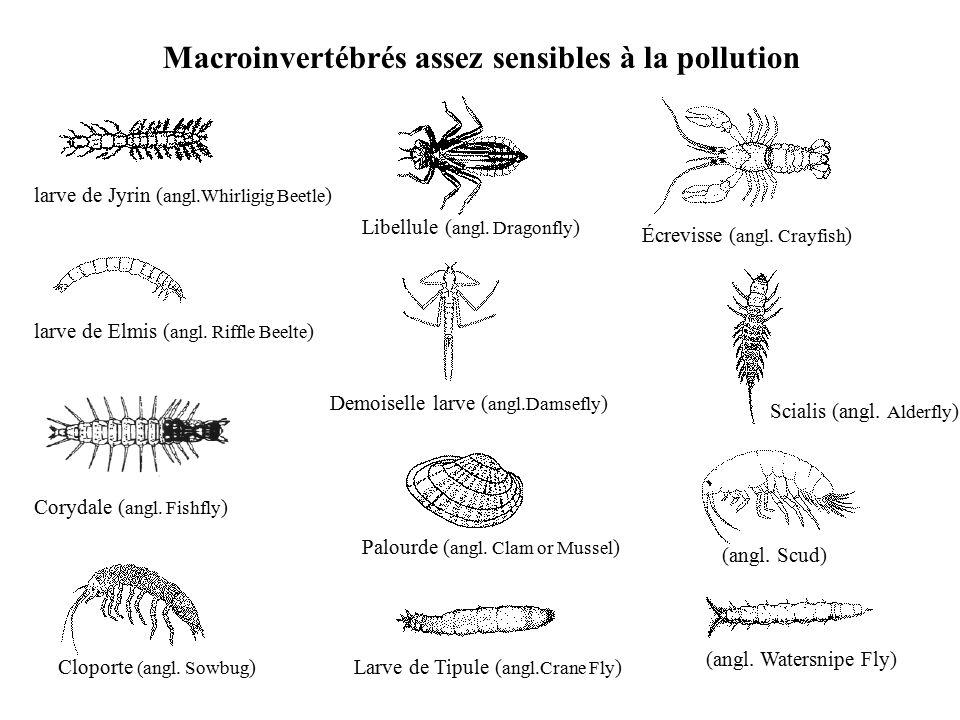 macroinvert br s sensibles la pollution ppt t l charger. Black Bedroom Furniture Sets. Home Design Ideas