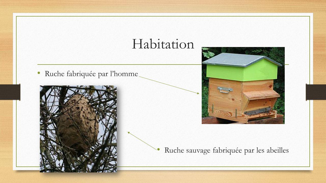 l abeille ppt video online t l charger. Black Bedroom Furniture Sets. Home Design Ideas