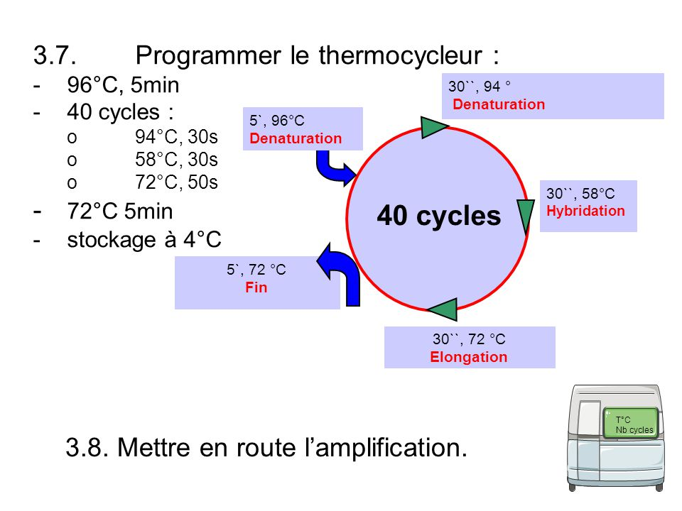 40 cycles 3.7. Programmer le thermocycleur : - 72°C 5min