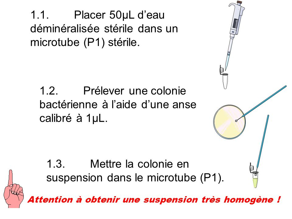 1.3. Mettre la colonie en suspension dans le microtube (P1).